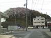 Sakura20091