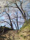Sakura20095