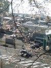 Sakura20096