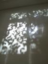 Treeshadow1