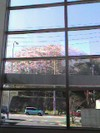 Sakura20073