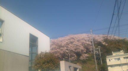 Sakura1_2